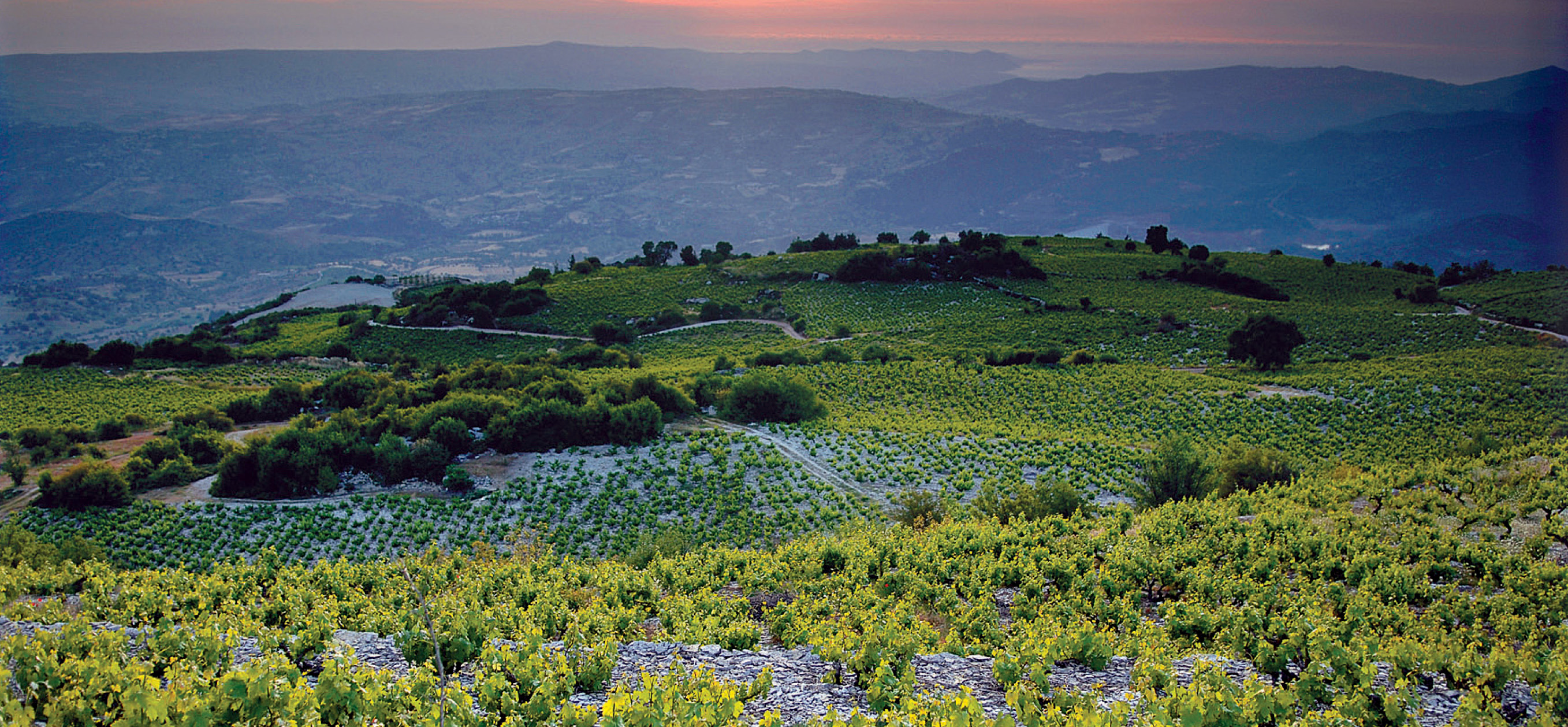Cyprus_vineyards_wine_routes_sunvil