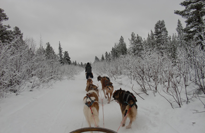 Northern Sweden Dog Sledding