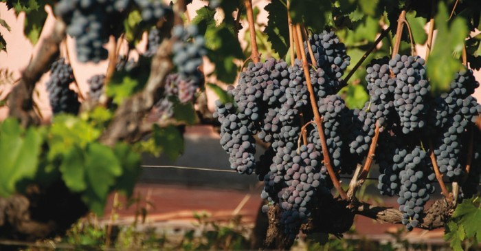 Veeyard Meaning: Staying On An Italian Vineyard: The True Meaning Of 'house