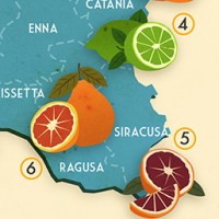 Sicilian Citrus Fruits Infographic featured image
