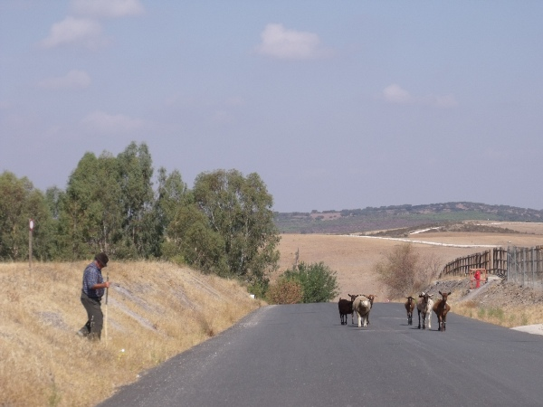 A lone shepherd with his goats at Aldeia da Luz