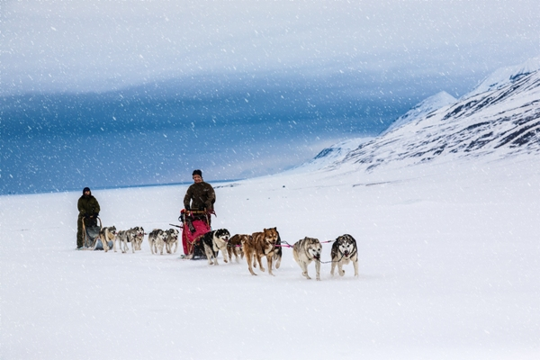 Dog sledding on a wintry Landscape, Svalbard.