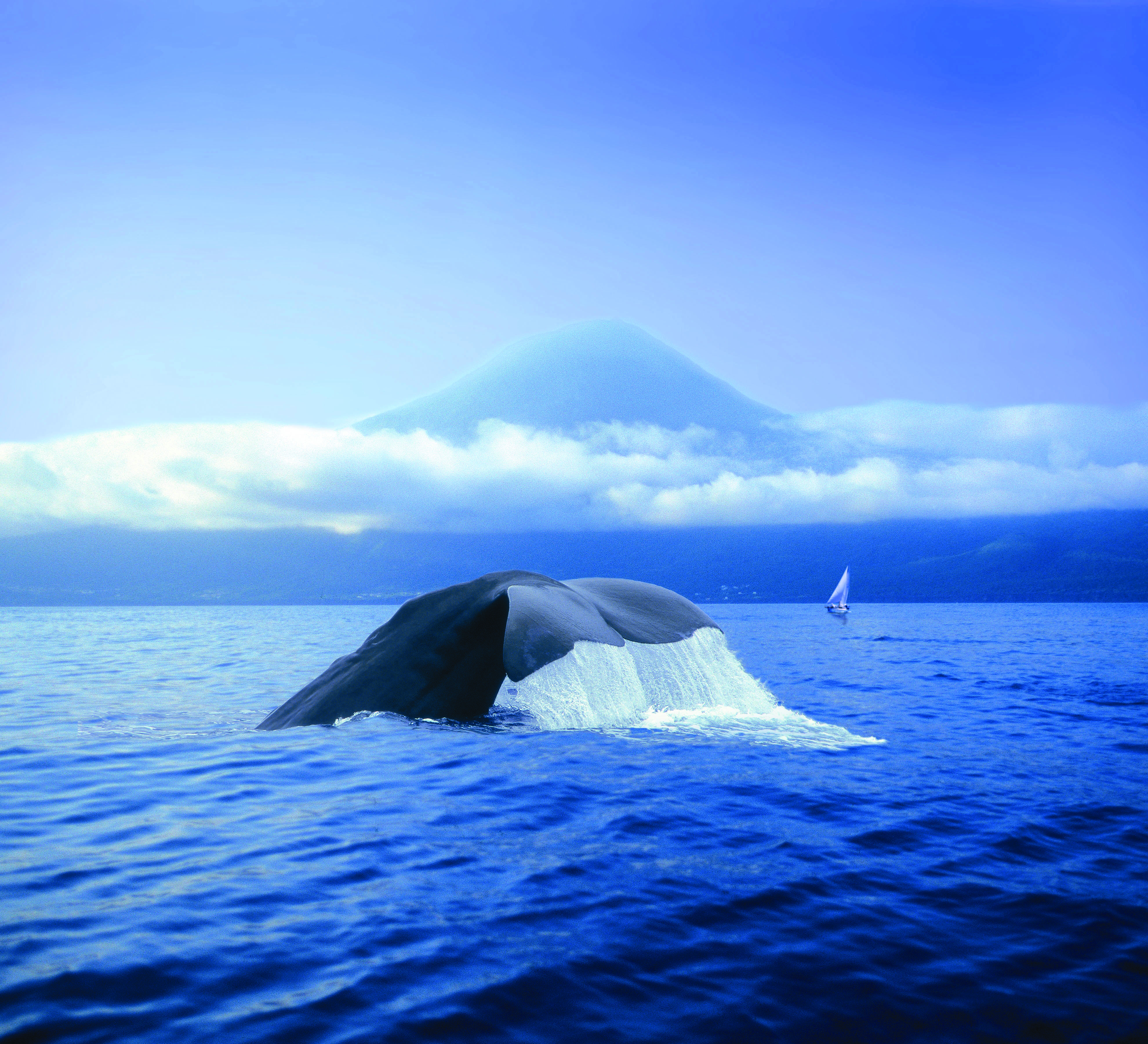 Whale watching, The Azores